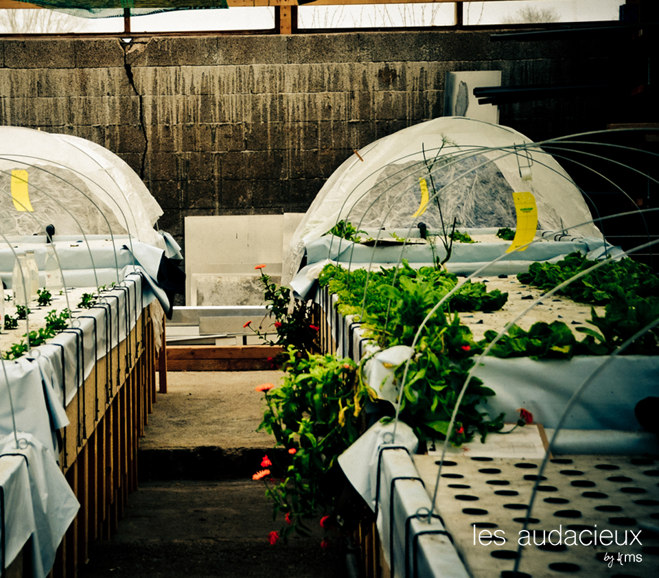 Ferme aquaponique des Vosges - Photo : kms communication pour les Audacieux